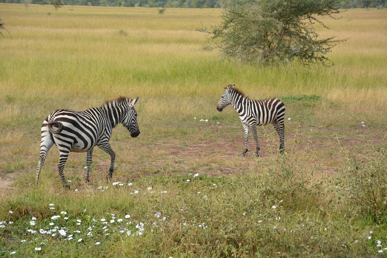 Voyager en Tanzanie pour passer des vacances exceptionnelles