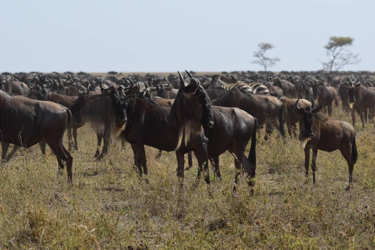 Parc du Serengeti en Tanzanie